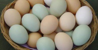 diversificar negocios poner huevos en distinta canasta
